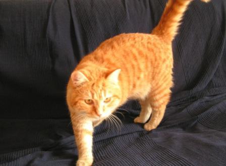 Tibert, un cat-model librement téléchargeable et utilisable à des finspédagogiques