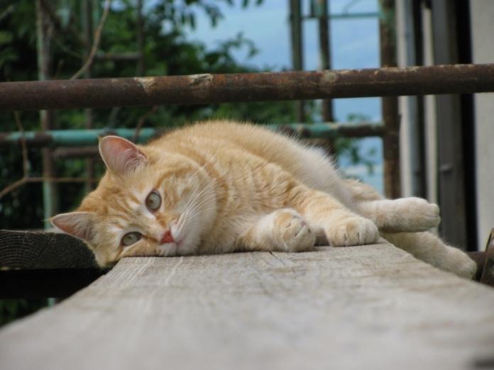 couché sur l'échafaudage
