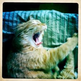 Yawning_2